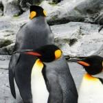 ペンギンアップデート3.0がいつのまにか実施済み!皆の影響は?
